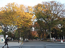 駒沢公園(約440m/徒歩6分)